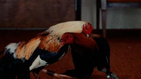 cockfighter1